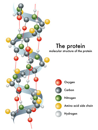 Proteina Archivio Fotografico - 27708809