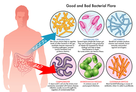bacterias: la flora bacteriana intestinal