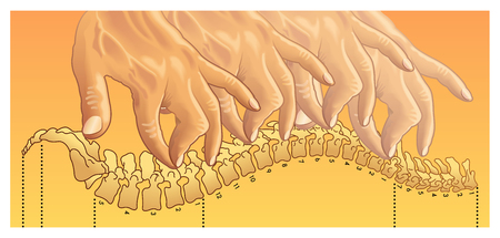 chiropractic Illustration