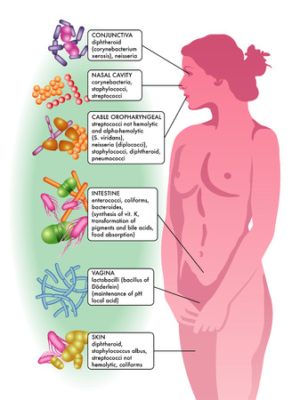 bacterial flora in a womans body Illustration