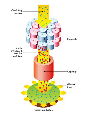 Function of insulin Illustration