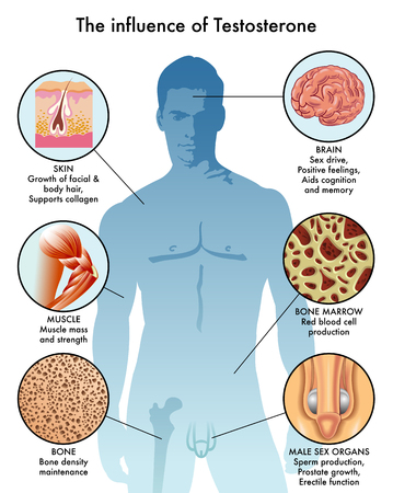the influence of testosterone Imagens - 87698841