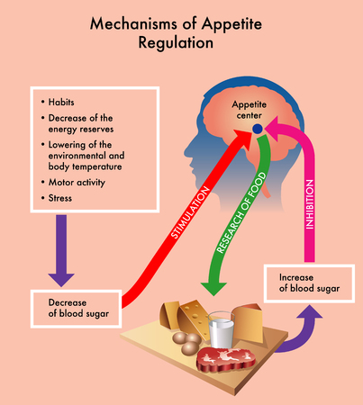 Medical diagram showing the mechanisms of appetite regulation. Stock Illustratie