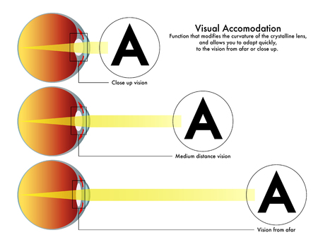 A medical diagram of visual accommodation, the function that modifies the curvature of the crystalline lens Illustration