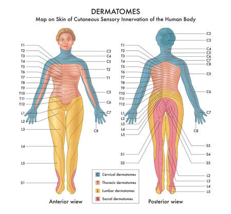 Map on Skin of Cutaneous Sensory Innervation of the Human Body