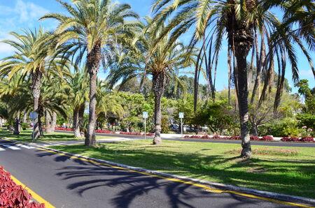 adeje: Street from Playa de las Am?ricas,Tenerife, Canary islands, Spain Stock Photo