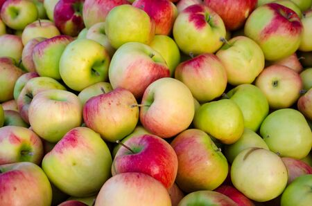 harvest organic: Yummy pile of apples in a market stall