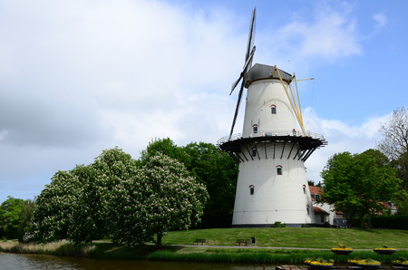 holland windmill: Windmill in the park city of Middleburg, Netherlands (Holland)