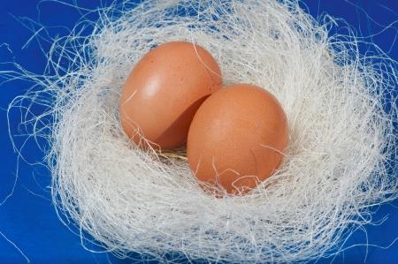 Easter - Easter Eggs photo