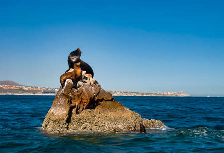 Sea lions basking in the sun at Lands End in the resort of Cabo San Lucas at the southern tip of Baja California in Mexico