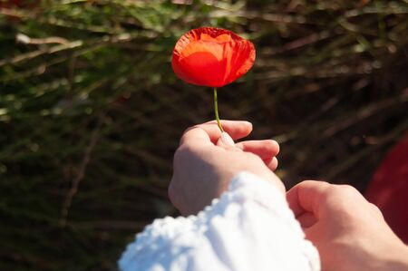 Young womans hands giving a poppy flower as a gift romantic.