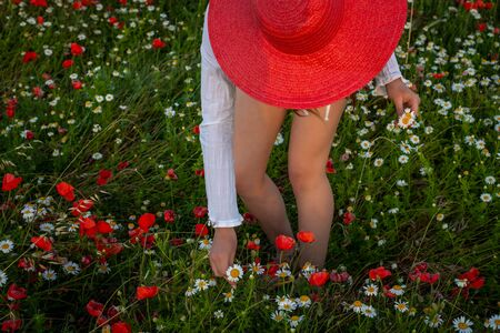 Young woman picking flowers  in poppy feild., wearing red stra w hat ,relaxing ,provence France. Banque d'images