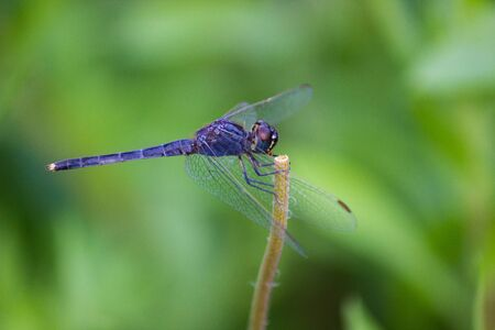 Beautiful Portrait of Dragonfly in its natural habitat