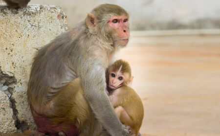 Mother Monkey and her baby