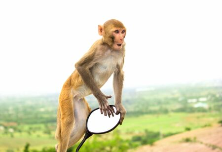 The Rhesus Macaque Monkey  looking away very curiously Stock Photo