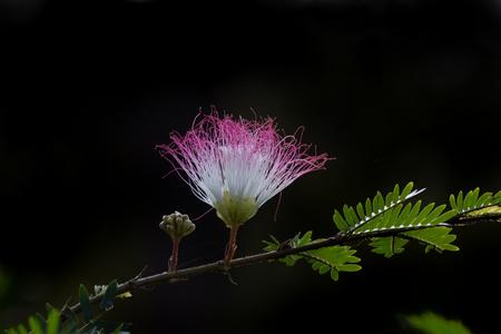 Persian silk flower