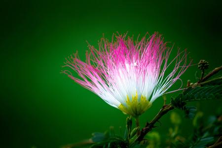 Persian Silk Flower Stock Photo