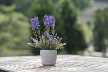 Indoor plant on wooden table