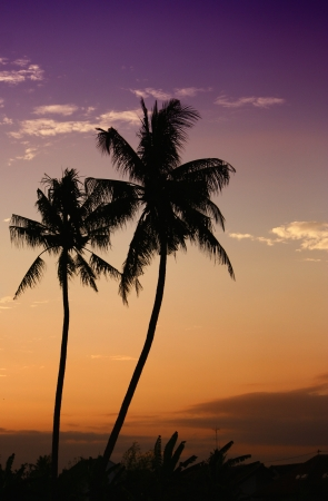 eine Silhouette von zwei schöne Kokosnussbaum