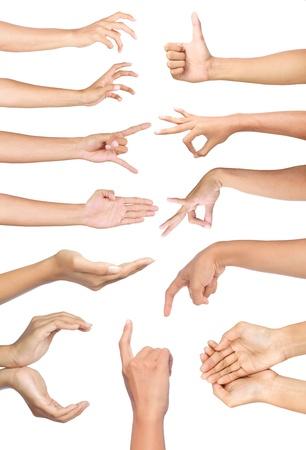 show of hands: Set di molte mani diverse gesto su sfondo bianco