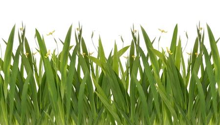 Hintergrund der grünen frisch frühling gras mit gelben Blume, isoliert auf weiss
