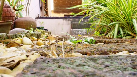 hardscape: Rock garden in the house Stock Photo