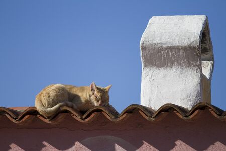 A red-haired cat sleeps in the sun on the tiles of a roof of a typical Mediterranean house with a traditional shaped chimney Foto de archivo