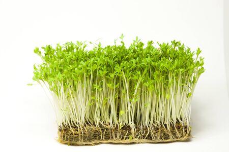 Organische Tuinkers