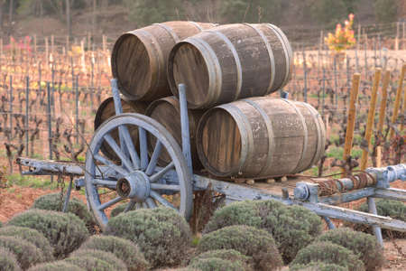 Barrels in a wineyard at the sunset. Stok Fotoğraf