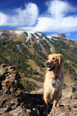 A happy golden retriever in front of a ski area in Kirkwood, California.