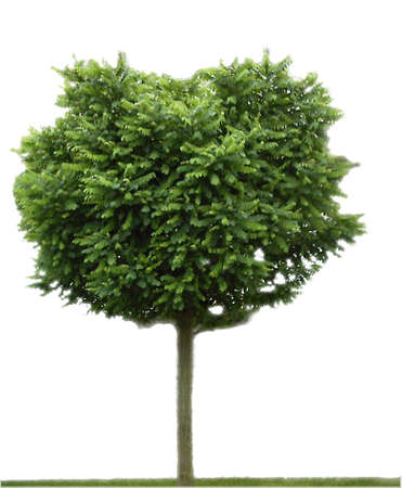 Tree, free standing Stock Photo - 3402790
