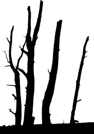 lonesome: Black and white trees, a graphic transformation of a BW photo, as decoration poster or card Stock Photo