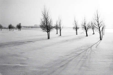 snowlandscape in holland photo