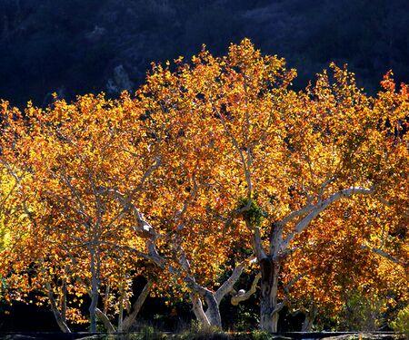 백라이트 나무