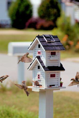 feeder: Bird Feeder