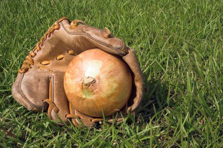 guante beisbol: Una cebolla de descanso en un guante de b�isbol.