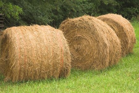 A field with bales of wheat hay. Stock Photo - 1201313