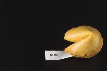 meow: Fortune Cookie - Meow!