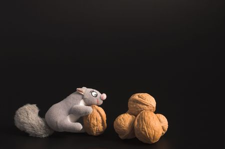A squirrel and an assortment of walnuts. photo