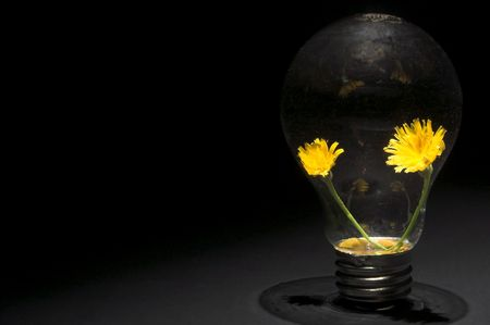 A pair of dandelions in a light bulb. Conservation, ecology concept. Stock Photo - 2017517