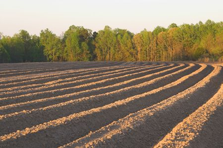 plowed: The furrows of a freshly plowed field. Stock Photo
