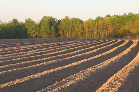 plowed field: The furrows of a freshly plowed field. Stock Photo