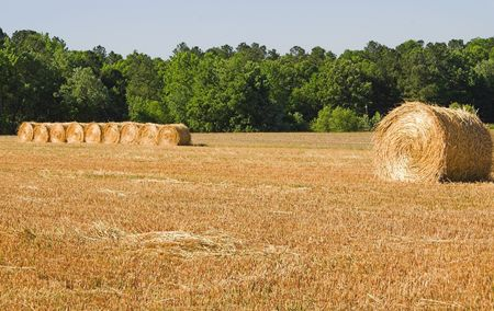 Large bales of freshly cut wheat hay. Stock Photo - 3037874