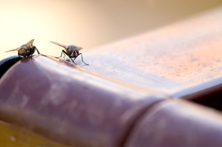 nuisance: A dirty nasty disease ridden house fly.