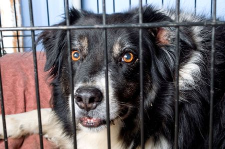 A border collie at a dog pound or pet store. photo