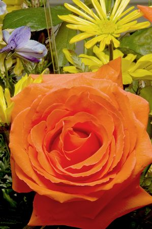 get: An assortment of fresh and colorful cut roses.