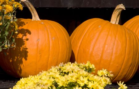 A large pile of plump and juicy holliday pumpkins. Stock Photo - 3672811