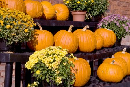 A large selection of plump and juicy holliday pumpkins. Stock Photo - 3672818