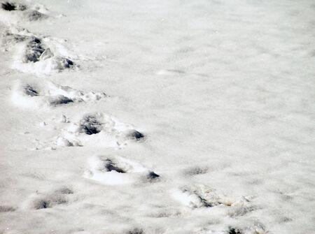 A set of deep footprints in freshly fallen snow. photo