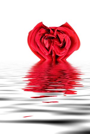 heart shaped: A beautiful heart shaped red rose ready for a loved one.
